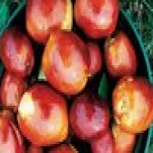 Spina Date Seed Extract